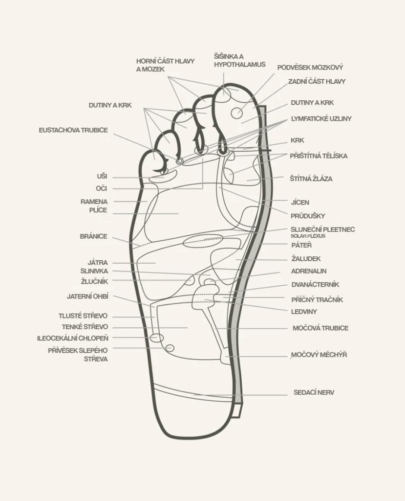 Reflexní body na chodidle podle Medicíny Jamu z Indonésie, která je podobná Čínské medicíně. Alternativní přírodní bylinná medicína.