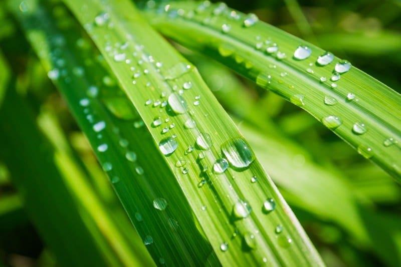 Aroma citrónové trávy uvolňuje stres a napětí, působí proti únavě a zvyšuje schopnost koncentrace.